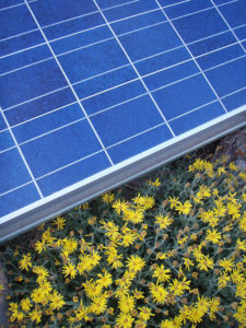 solar and yellow flowers