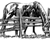 horse drawing by Sara Tuttle