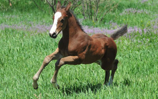 Melanie's running colt